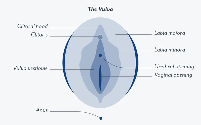 Vaginal odor - the vulva diagram - kaia naturals