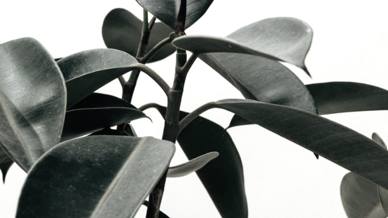 Best Indoor Air Purifying Plants- According to NASA